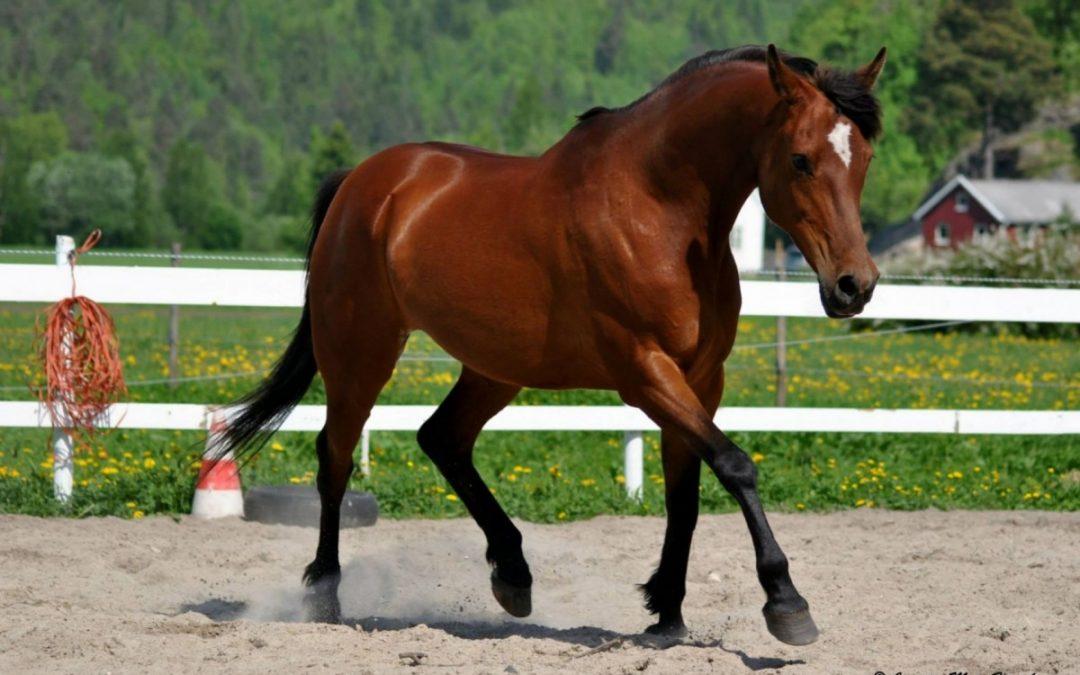 Sommerkurs: Relasjonsbygging mellom hest og menneske