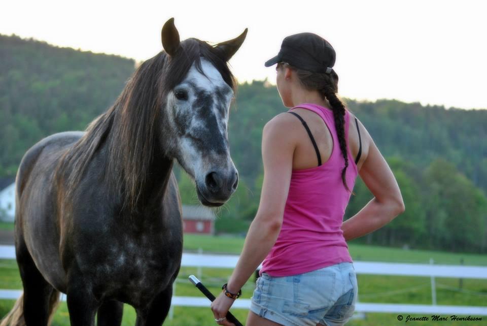 Tålmodighet er nøkkelen i kommunikasjon med hesten