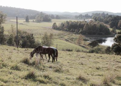 sabona gård